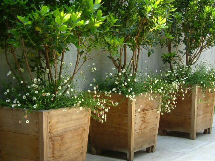 ... Potted Plant Ideas For Patios And Deck  Amazing Deck